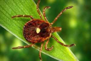 Pennsylvania's Lyme Disease: Asked to avoid Ticks & symptoms of Lyme Disease
