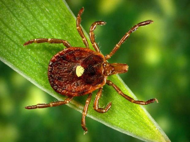 Pennsylvania's Lyme Disease: Asked to avoid Ticks & symptoms of Lyme Disease