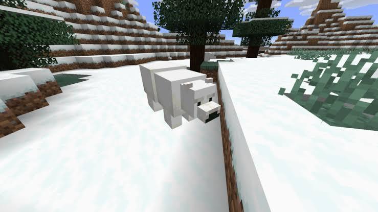 Can you tame a polar bear in Minecraft PE
