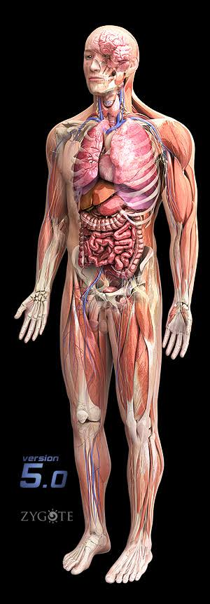 3D View Of Human Body, Technology Used And The Idea Behind